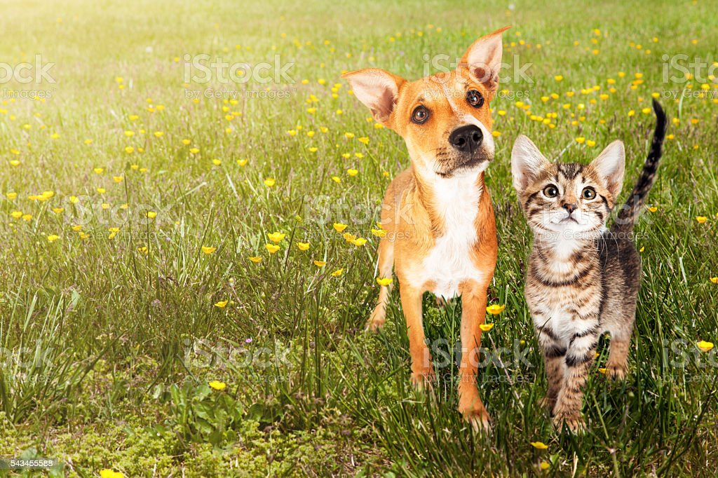 Dog and Cat in Open Field stock photo
