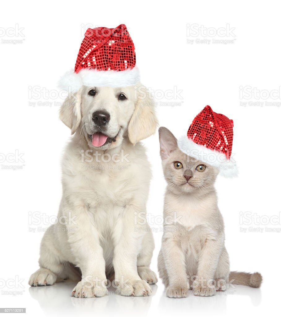 Dog and Cat in Santa red hat stock photo