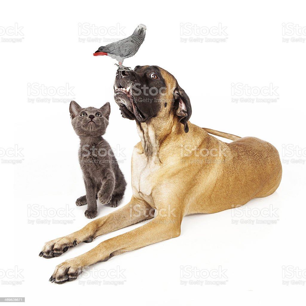Dog and cat looking at a bird stock photo