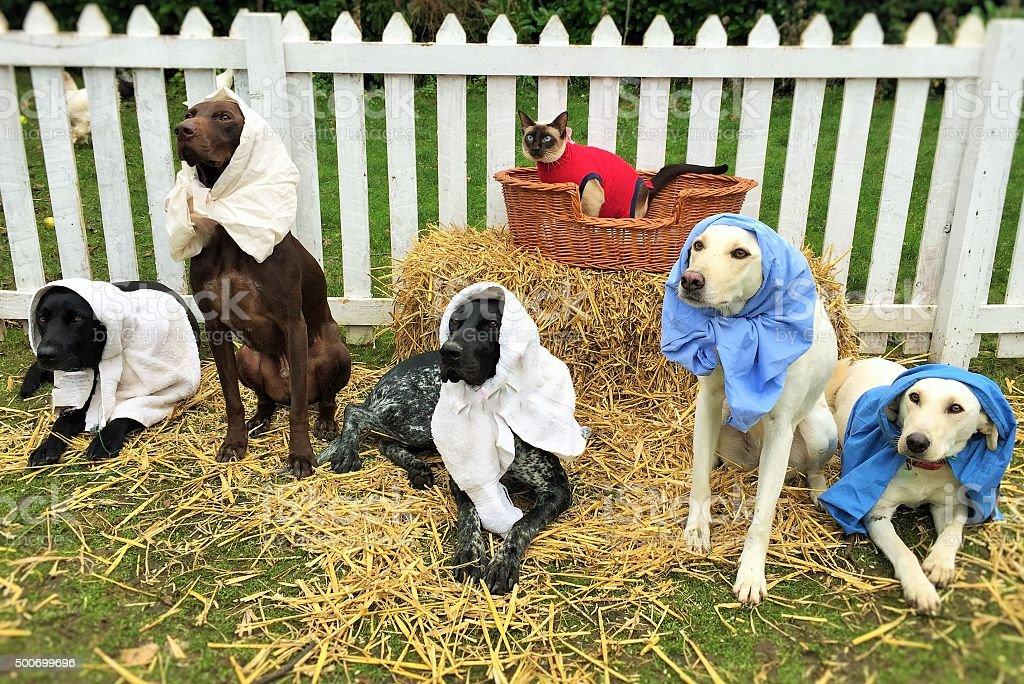 Dog and Cat Nativity Scene stock photo