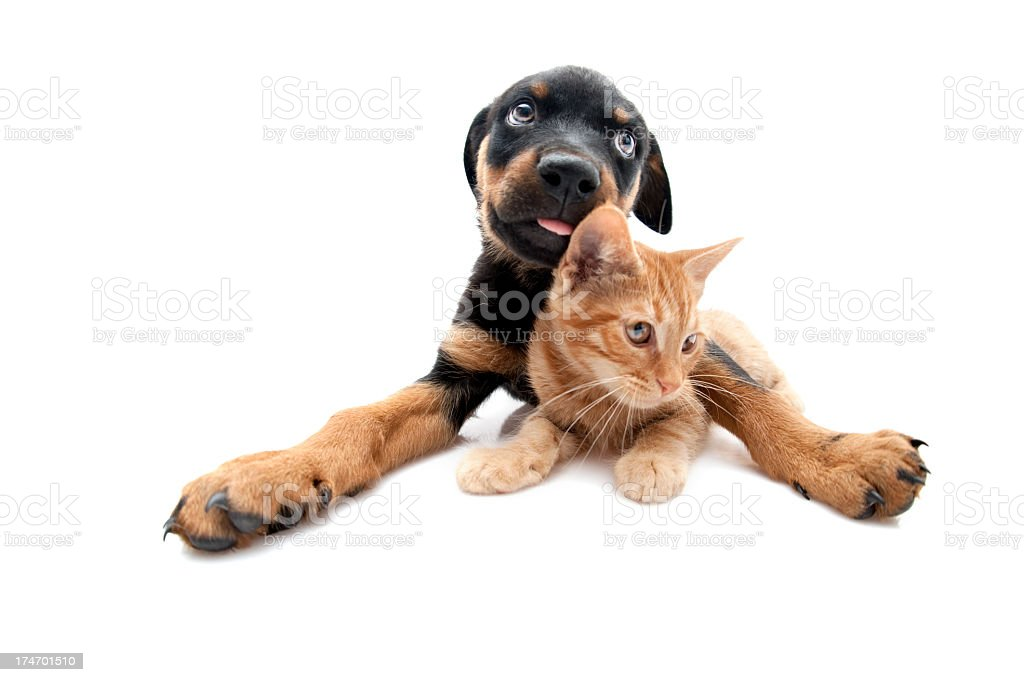 dog and cat royalty-free stock photo