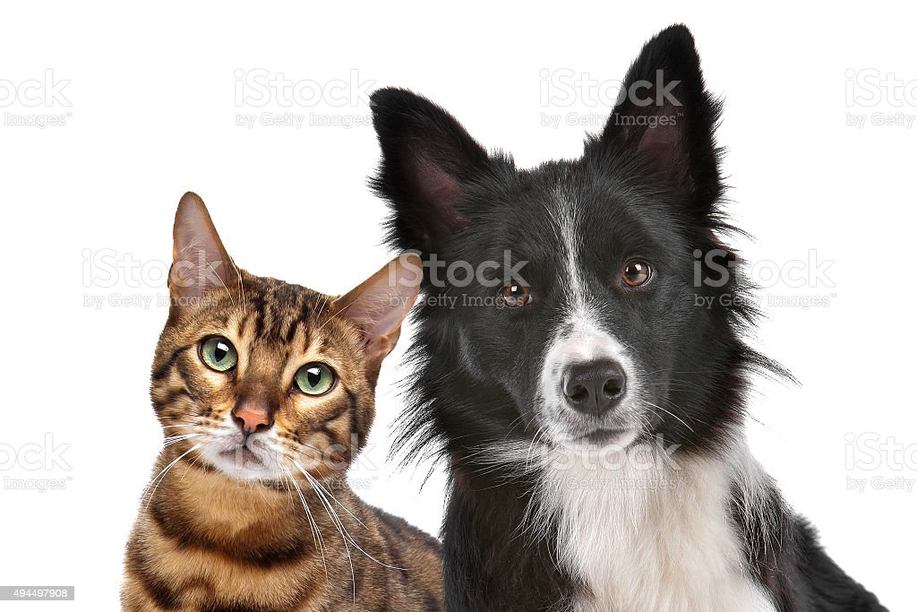 Chien et chat - Photo