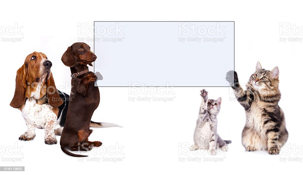 dog and cat stock photo