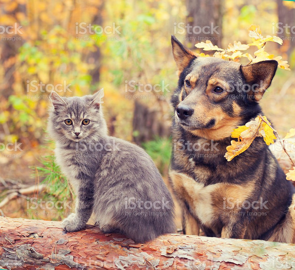 Dog and cat  sitting together outdoors in autumn forest stock photo