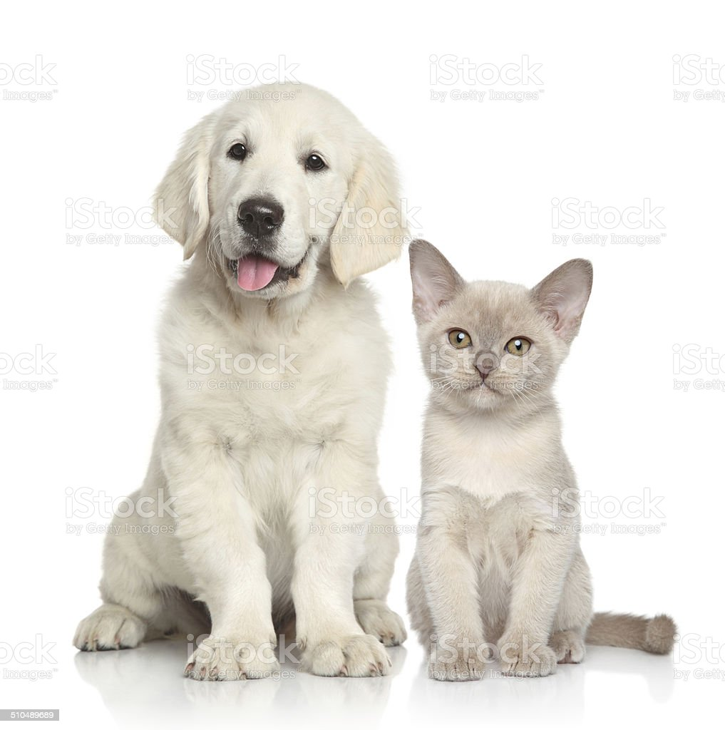 Dog and Cat together stock photo