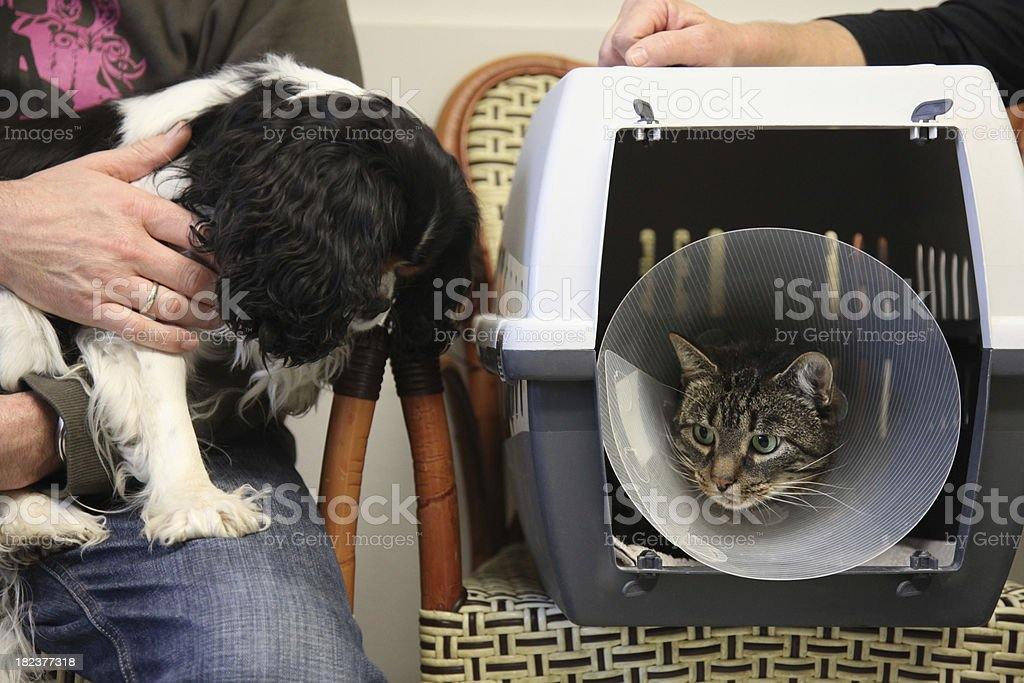 Dog and cat waiting for the vet royalty-free stock photo