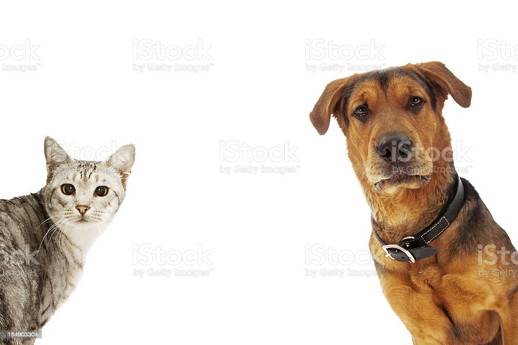 Dog and Cat With Copy Space stock photo