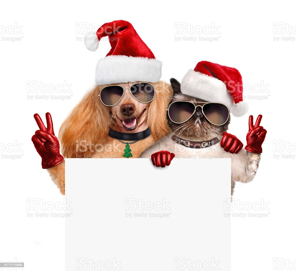 Dog and cat with peace fingers in red Christmas hats stock photo