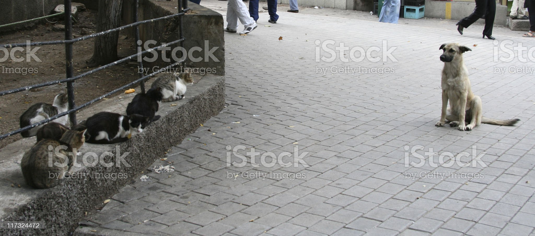 dog and cats royalty-free stock photo