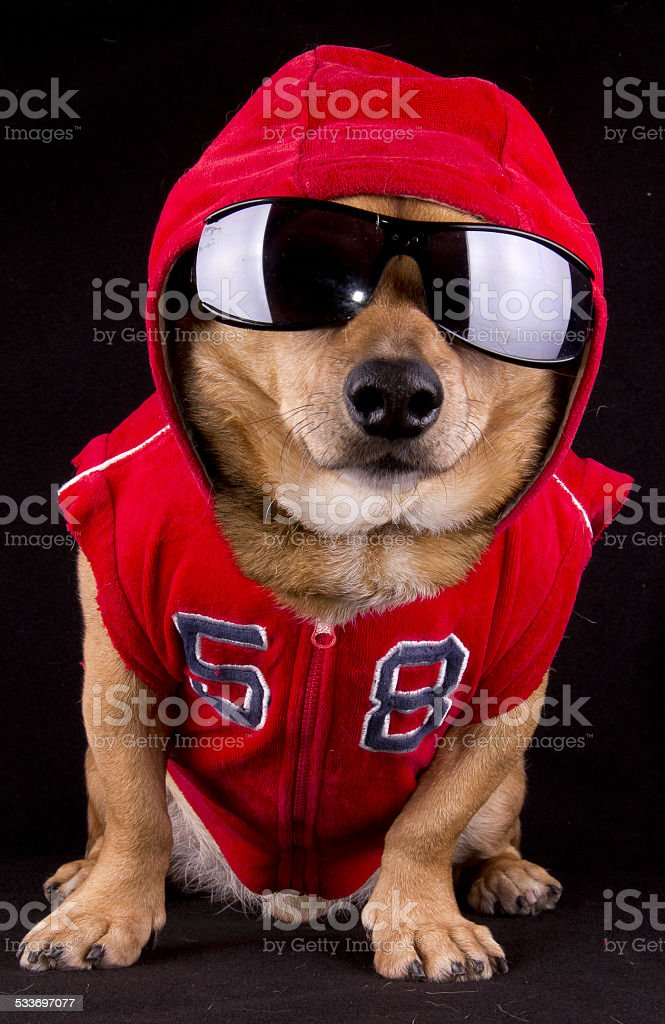 dog and fur stock photo
