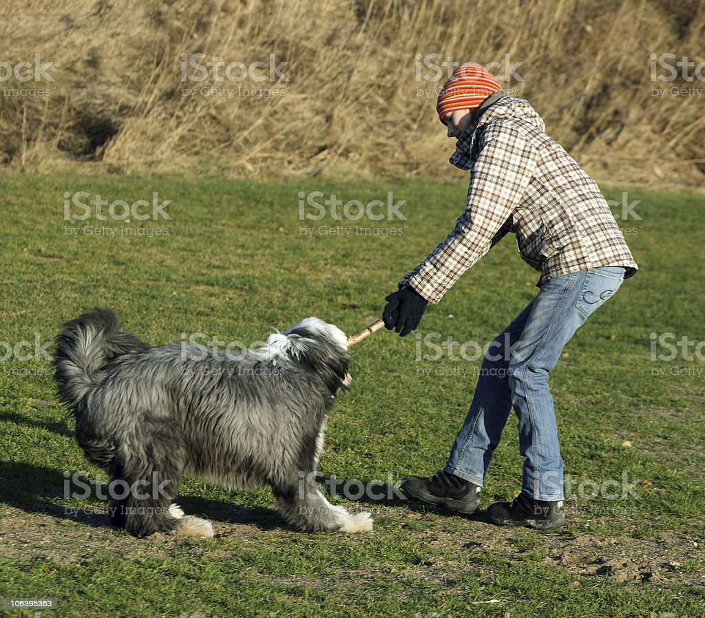 Dog and girl fighting over a stick royalty-free stock photo