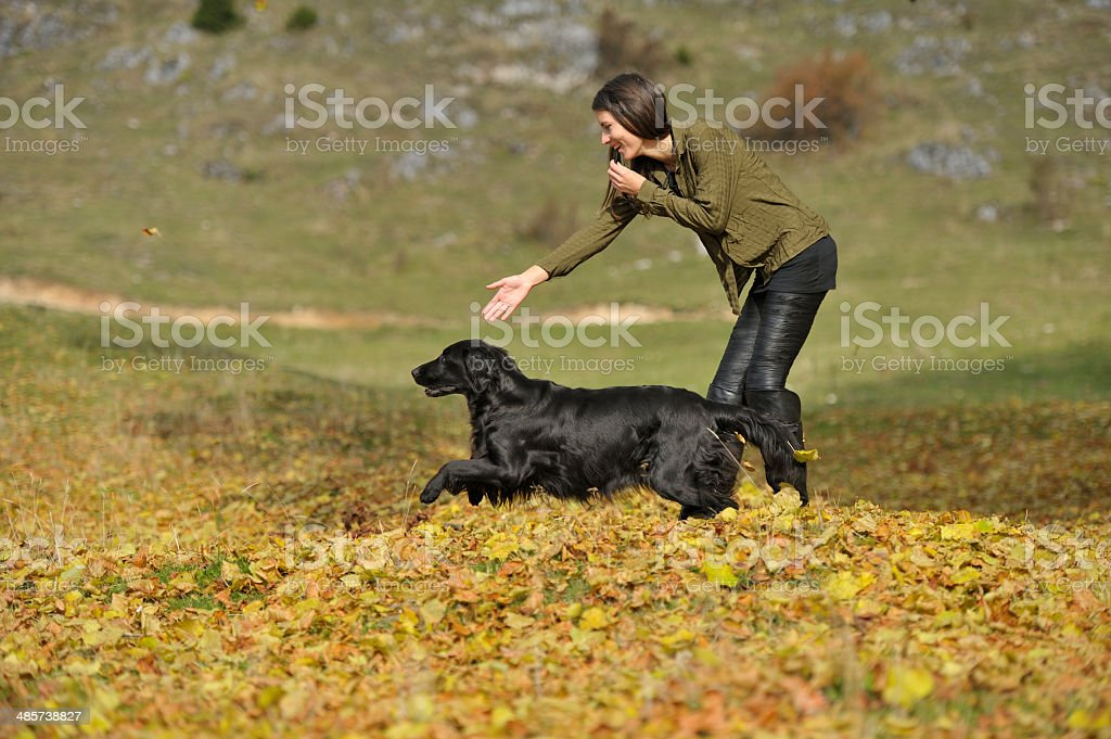 Dog and handler retrieving exercise royalty-free stock photo