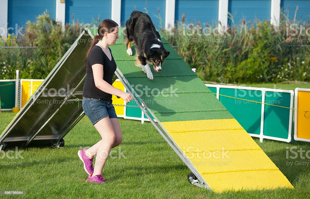 Dog and handler working together in agility competition, the a-frame. stock photo