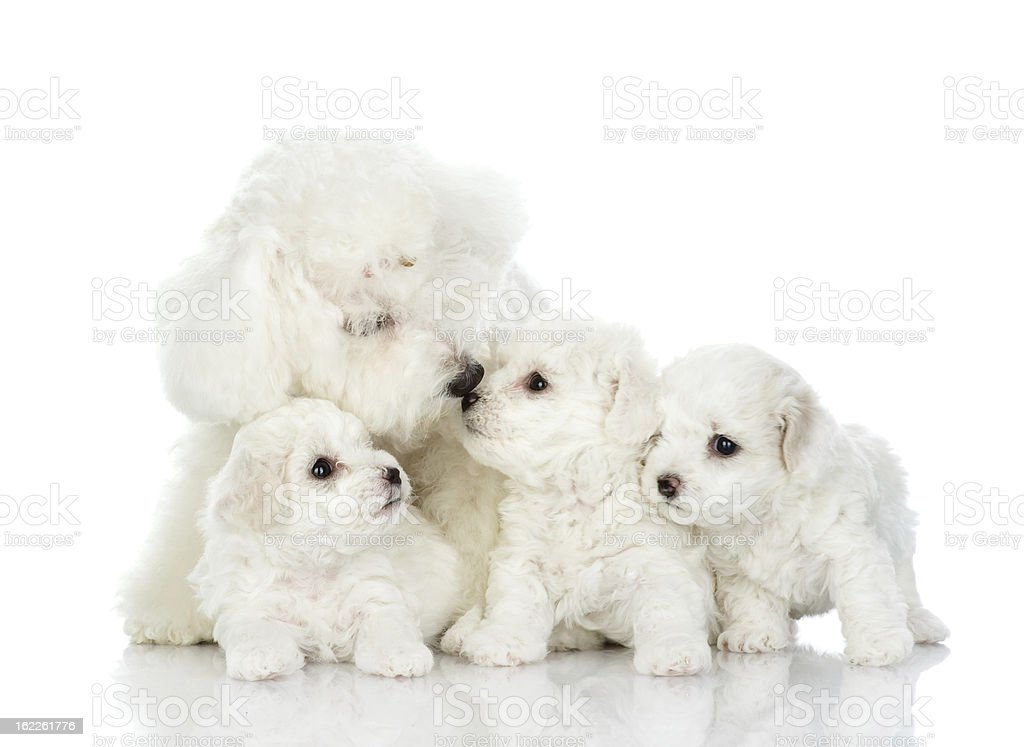 dog and her puppies royalty-free stock photo