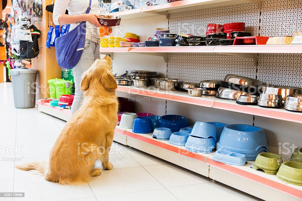 Dog and his owner in pet store buying new bowl stock photo
