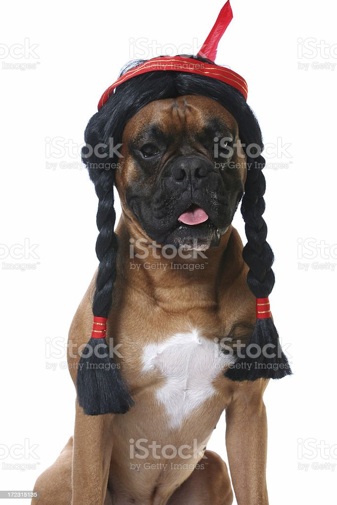 Dog and his wig royalty-free stock photo