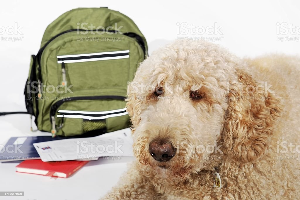 dog and homework royalty-free stock photo
