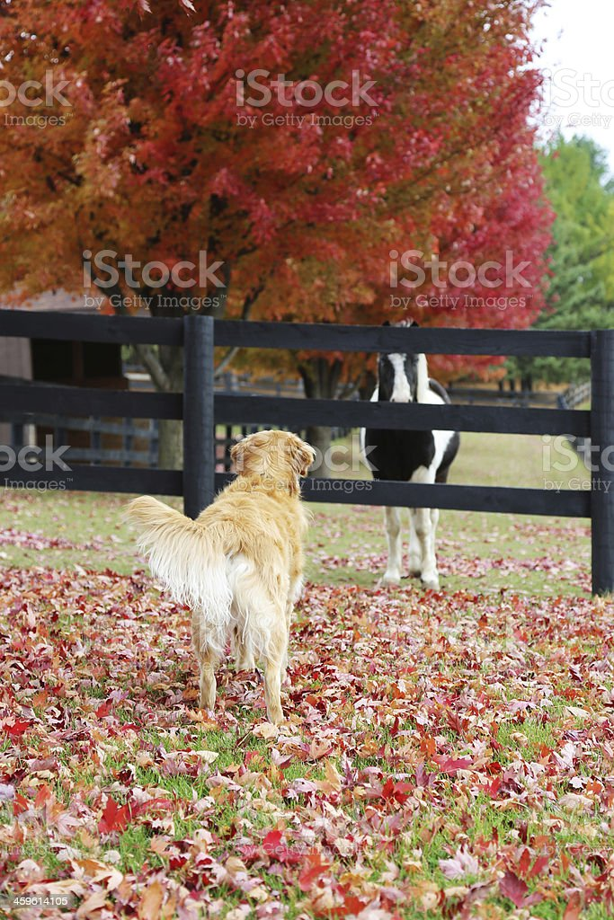 Dog and Horse Stare Down royalty-free stock photo