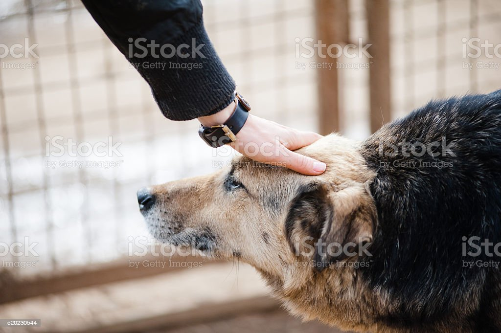 dog and human hand stock photo