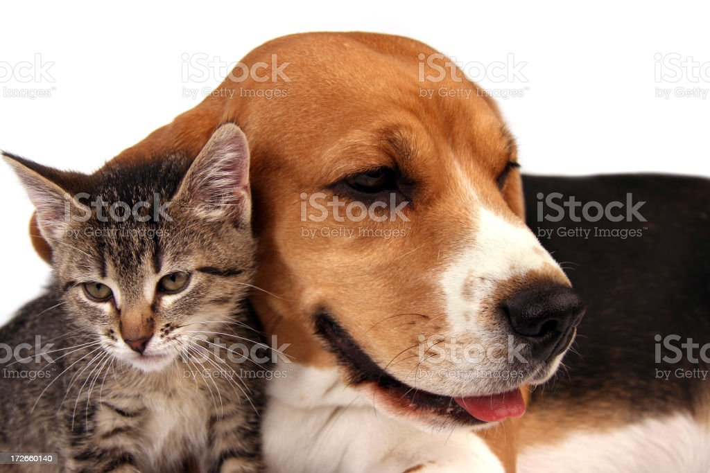 Dog and kitten sitting close together royalty-free stock photo