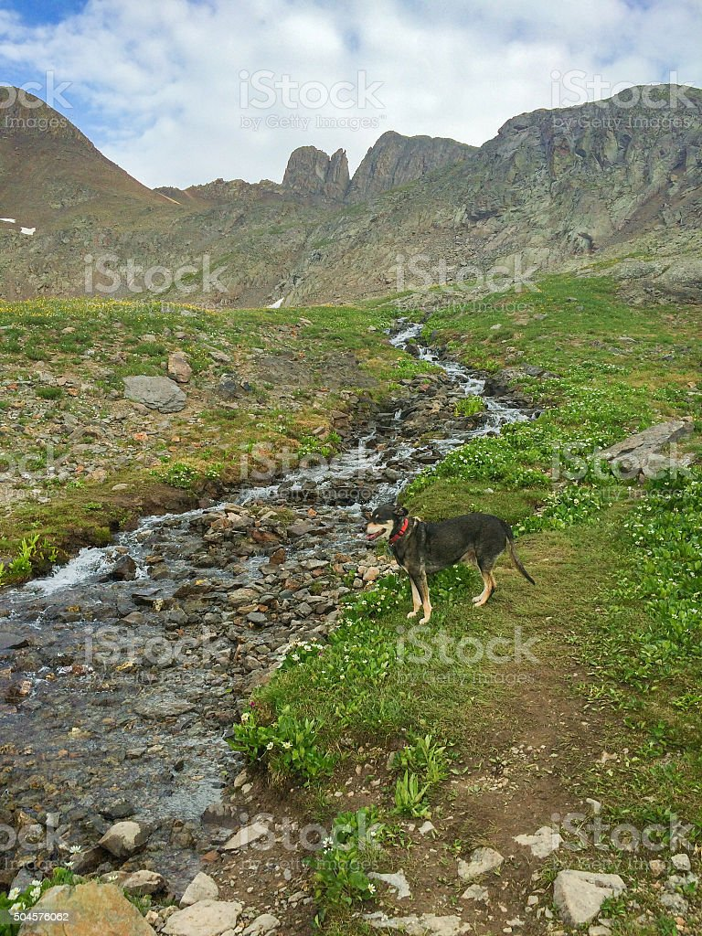 dog and landscape rocky mountain stream stock photo