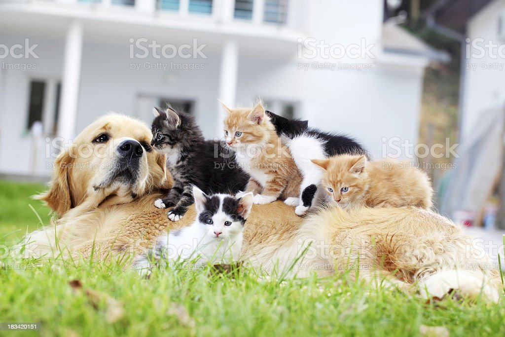 Dog and little cats are lying outdoor. royalty-free stock photo
