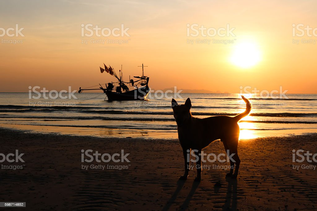 Dog and long tail boat with sunset. stock photo