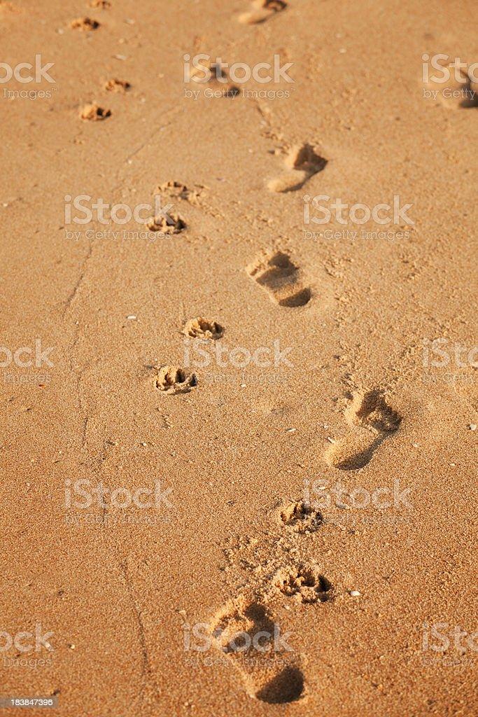 Dog and man footprints royalty-free stock photo