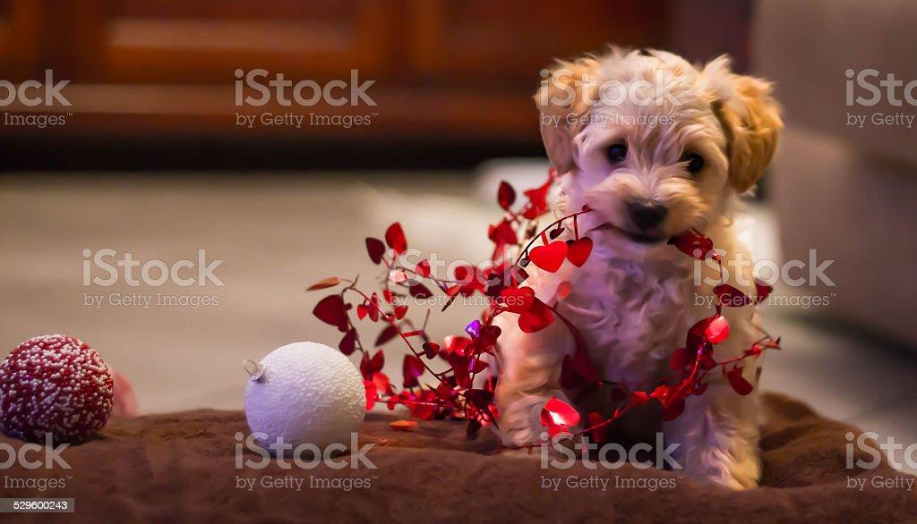 Dog and Merry Christmas stock photo