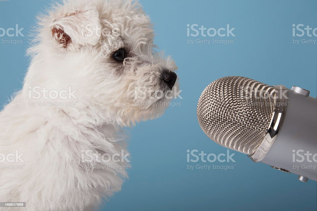 Dog and microphone stock photo