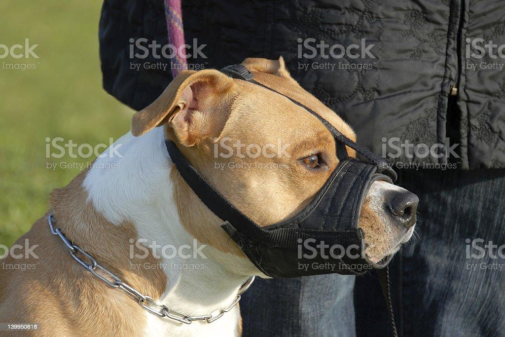 dog and muzzle stock photo