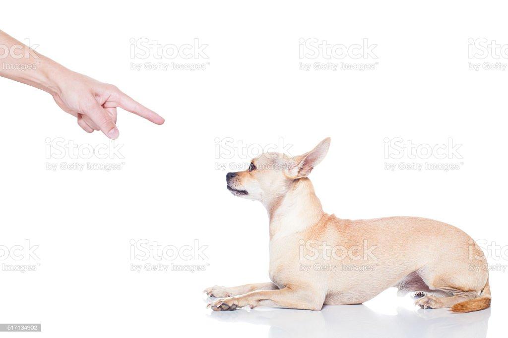 dog and owner punish stock photo
