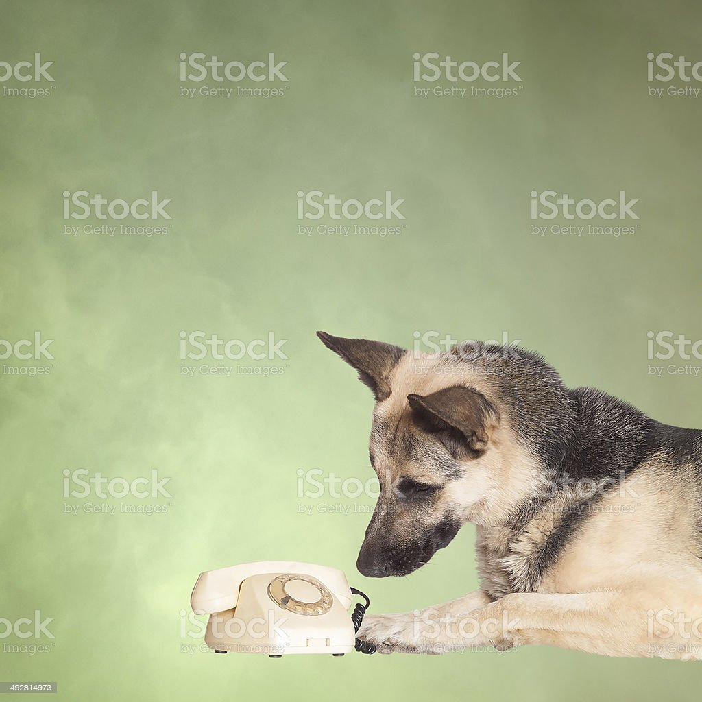 Dog and phone royalty-free stock photo