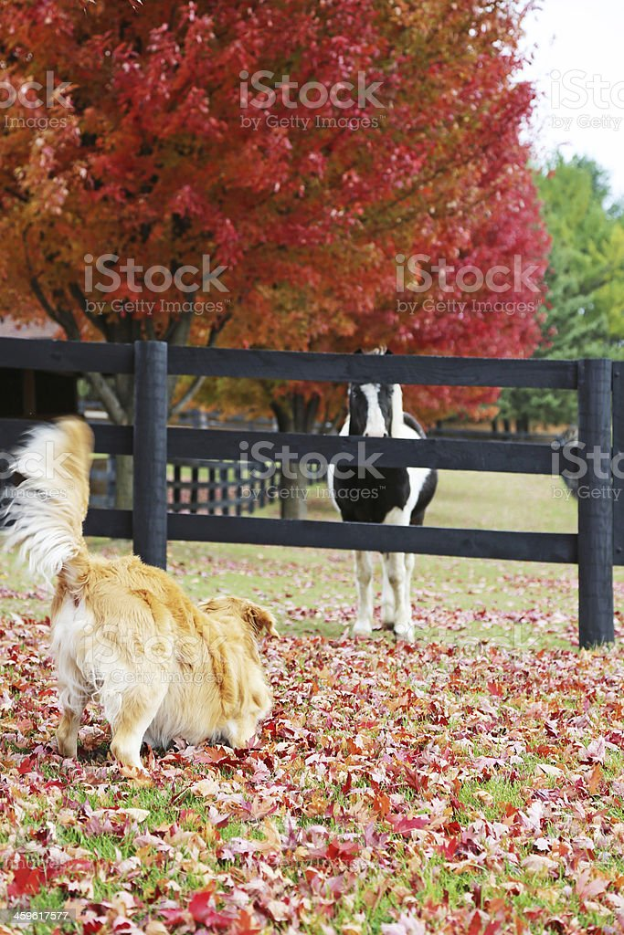 Dog and pony playing on the farm in fall royalty-free stock photo