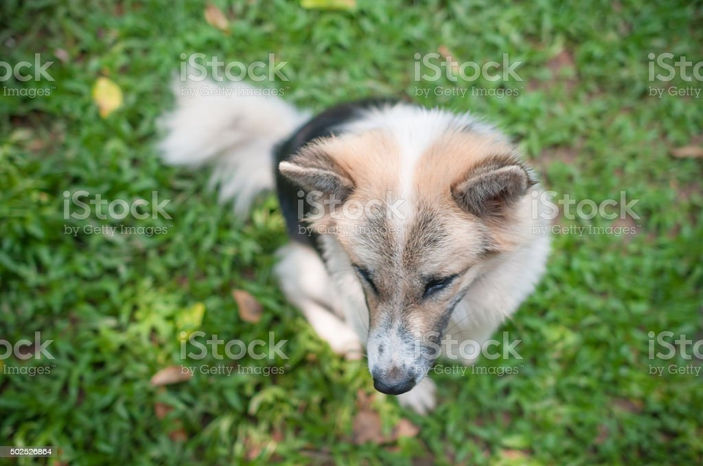 Dog and puppies stock photo