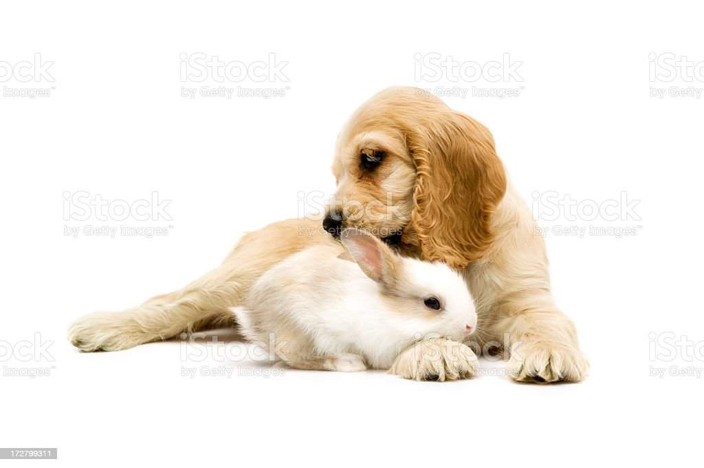 dog and rabbit royalty-free stock photo