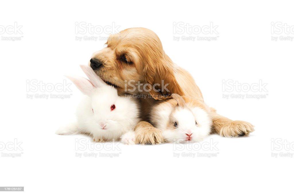 dog and rabbit stock photo