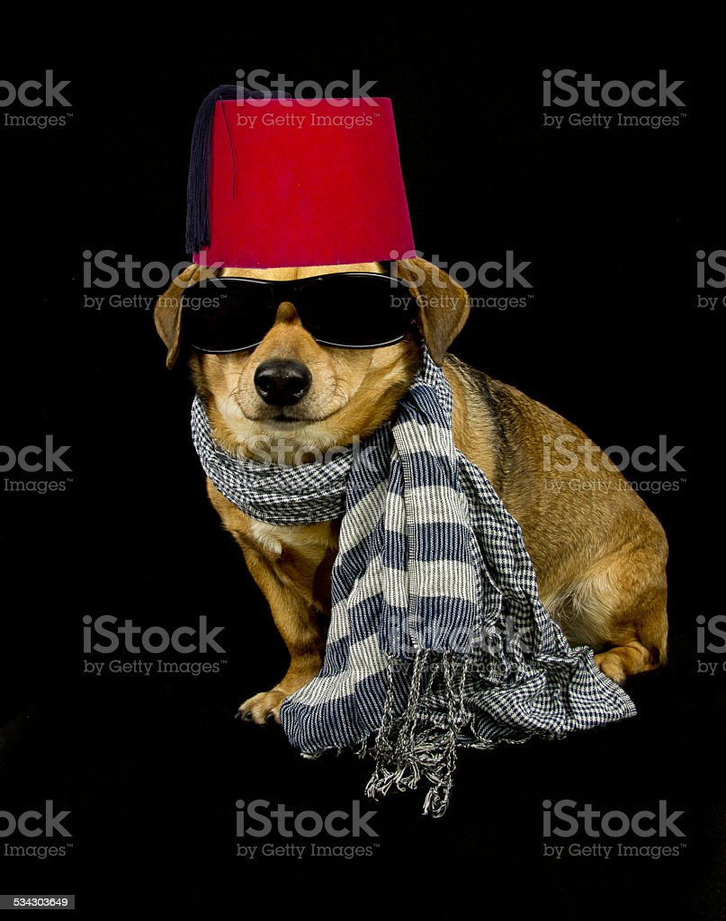 dog and scarf stock photo