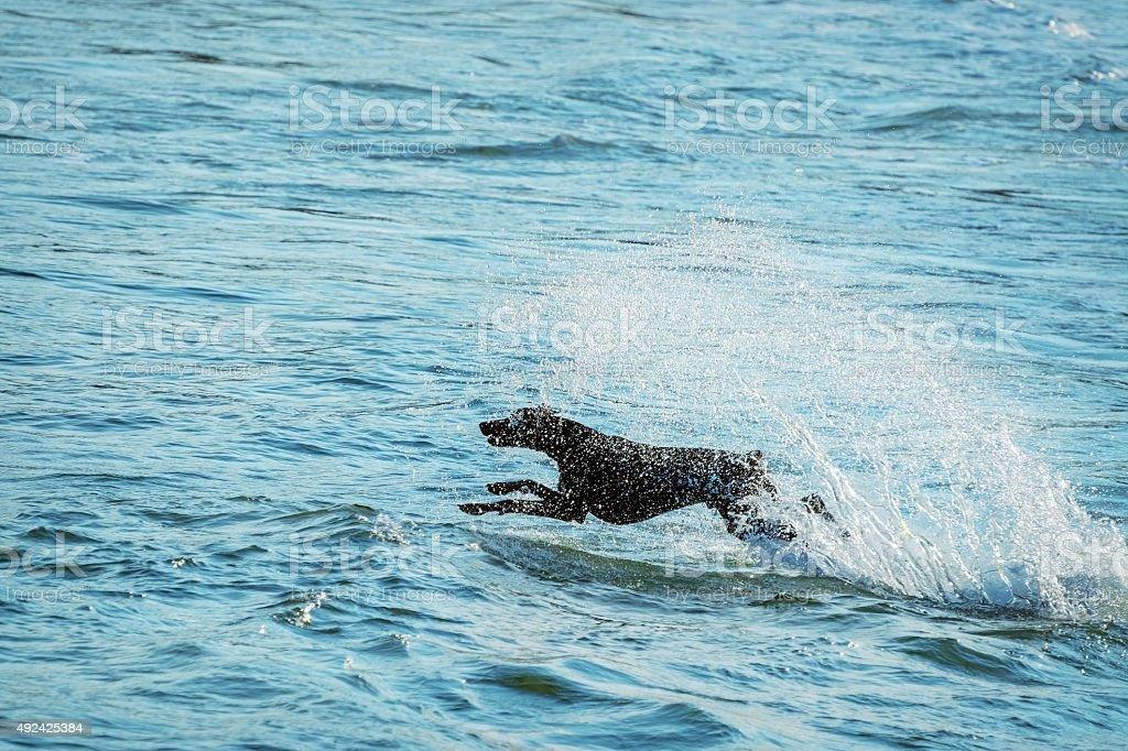 Dog and Sea stock photo