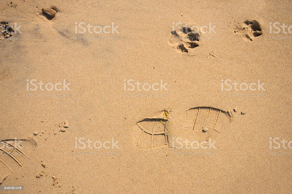 Dog and shoe prints on the beach stock photo