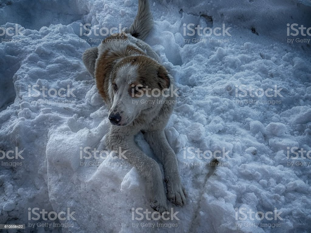 Dog and Snow stock photo