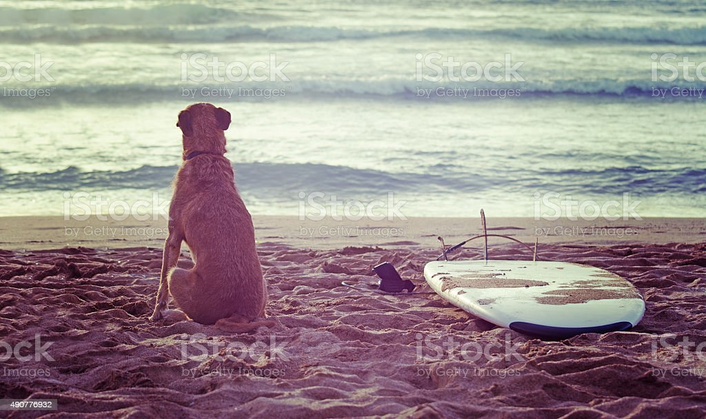dog and surfboard at sunset stock photo