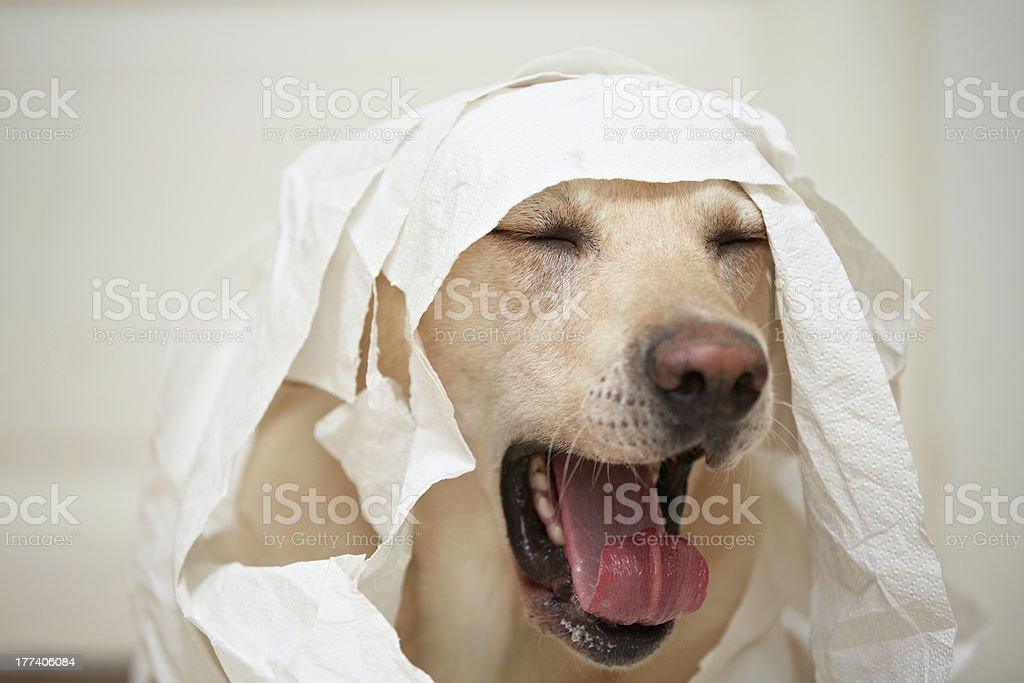 Dog and toilet paper stock photo