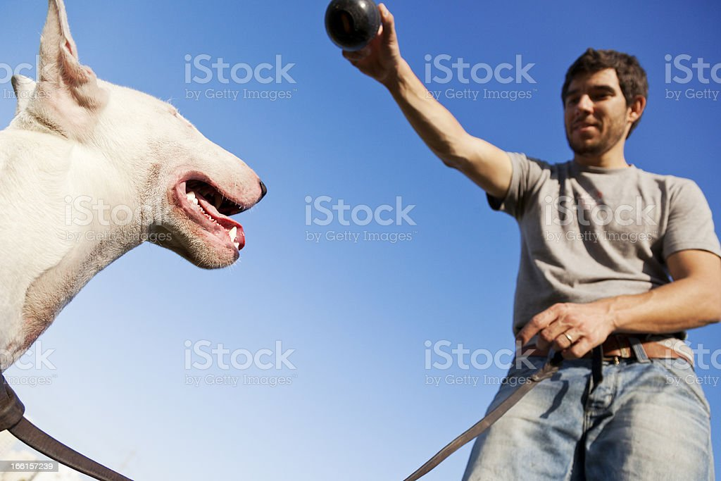 Dog and Trainer Chew Toy Tension royalty-free stock photo