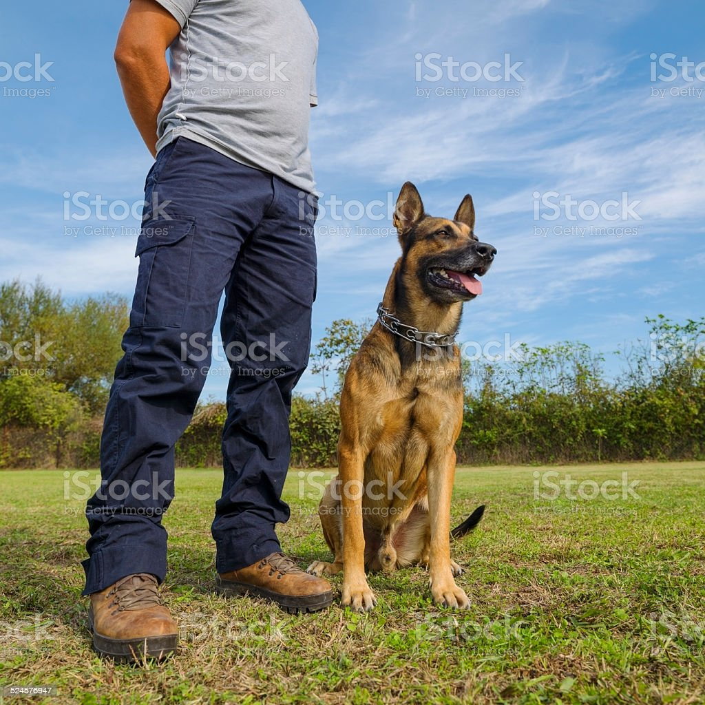 Dog and trainer stock photo