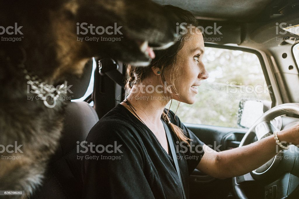 Dog and Woman on Adventure in Car stock photo