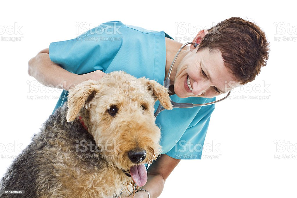 Dog Appointment with Veterinarian on White Hz royalty-free stock photo