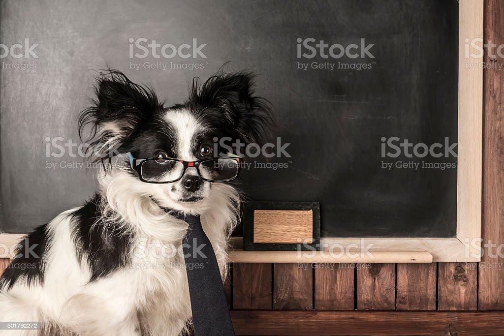 Dog as a school teacher stock photo