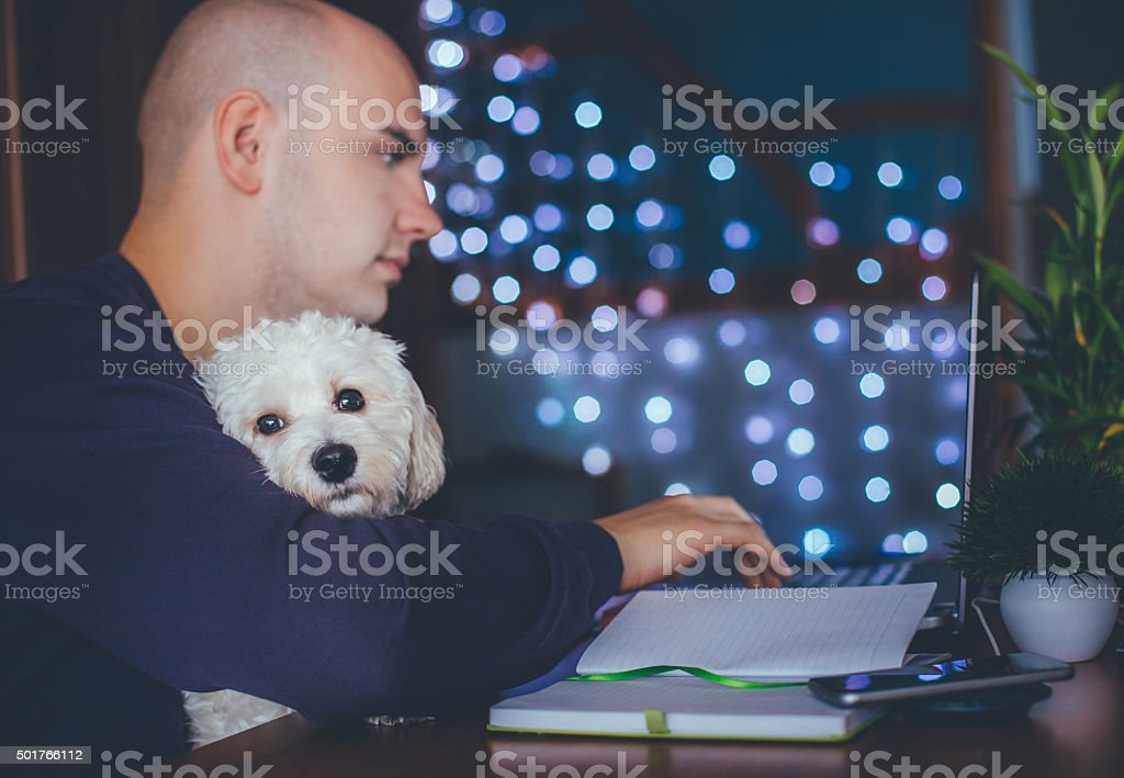 Dog as an integral part of the office stock photo