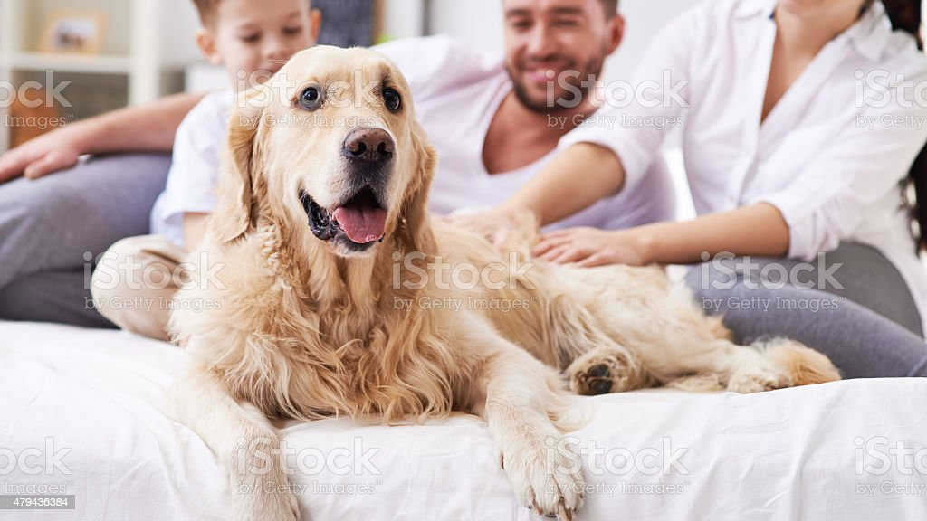 Dog as member of family stock photo